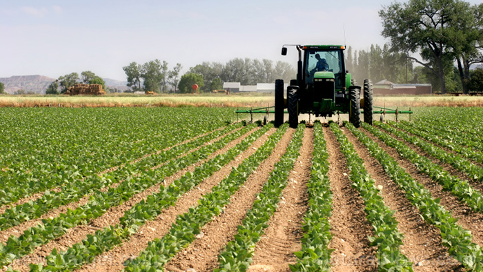 Switching to agricultural practices that call for less plowing can benefit the environment in the long run