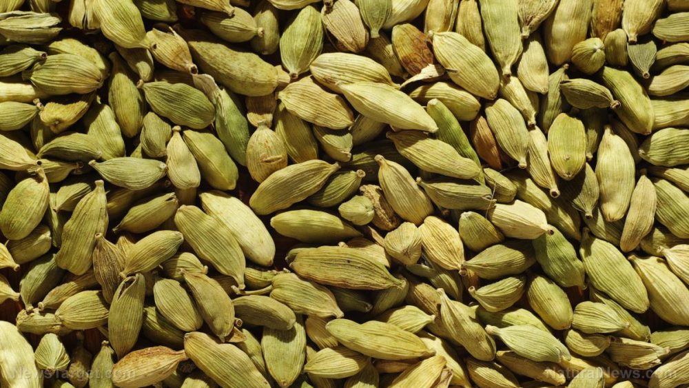 Green cardamom supplements can protect the liver for those with obesity