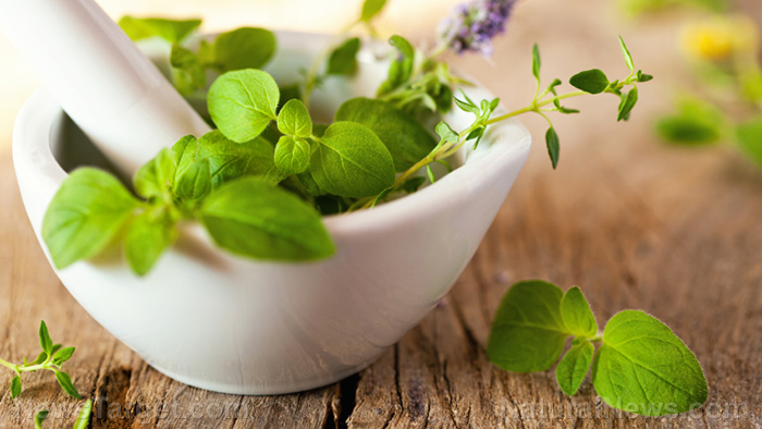 Grow your medicine cabinet with these 7 perennial herbs