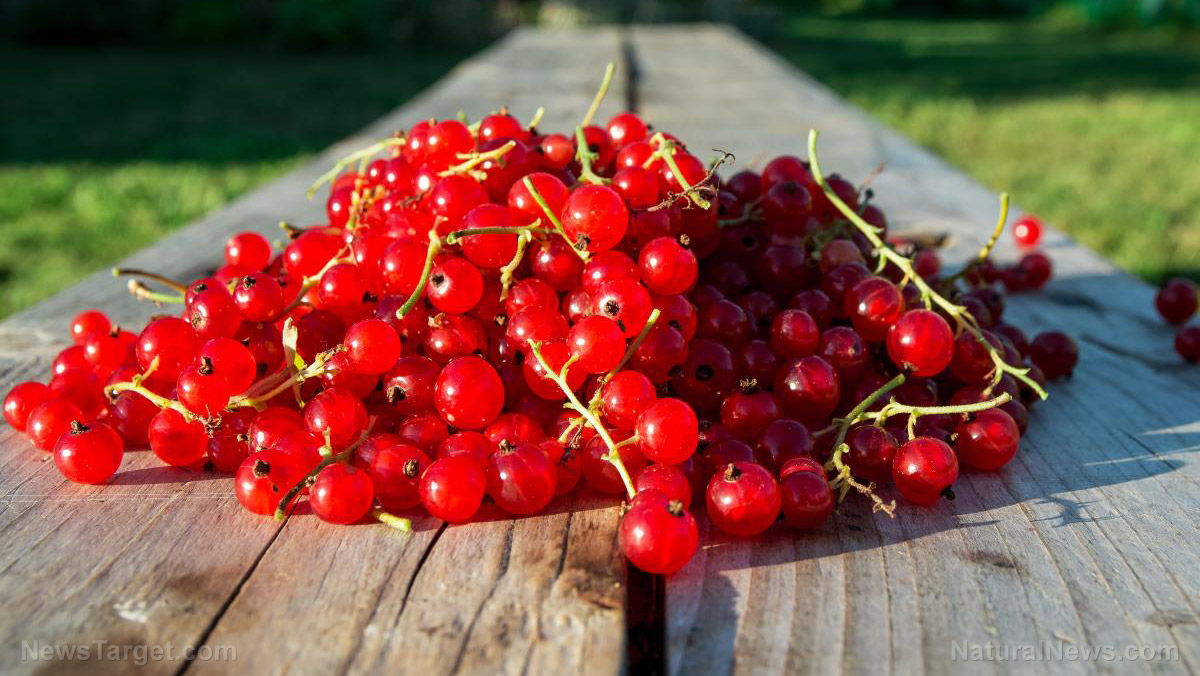 Ruby-red wonders: Six amazing health benefits of cranberries