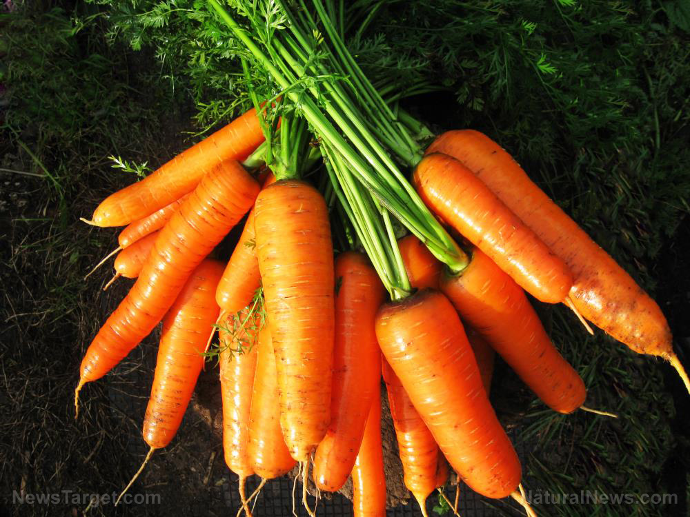 5 Reasons why CARROTS should be a staple in your veggie garden