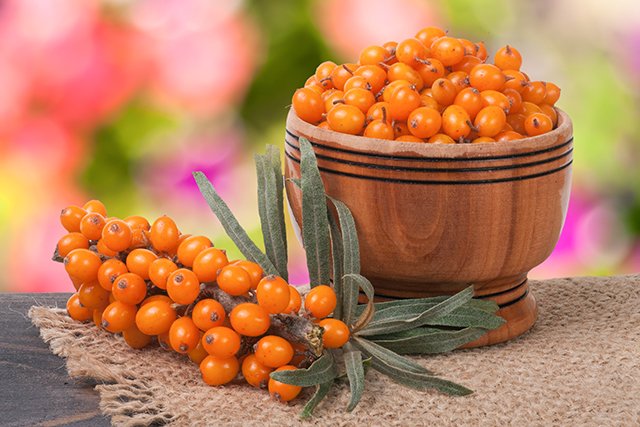 The different uses of sea buckthorn oil, an anti-aging and heart-healthy oil