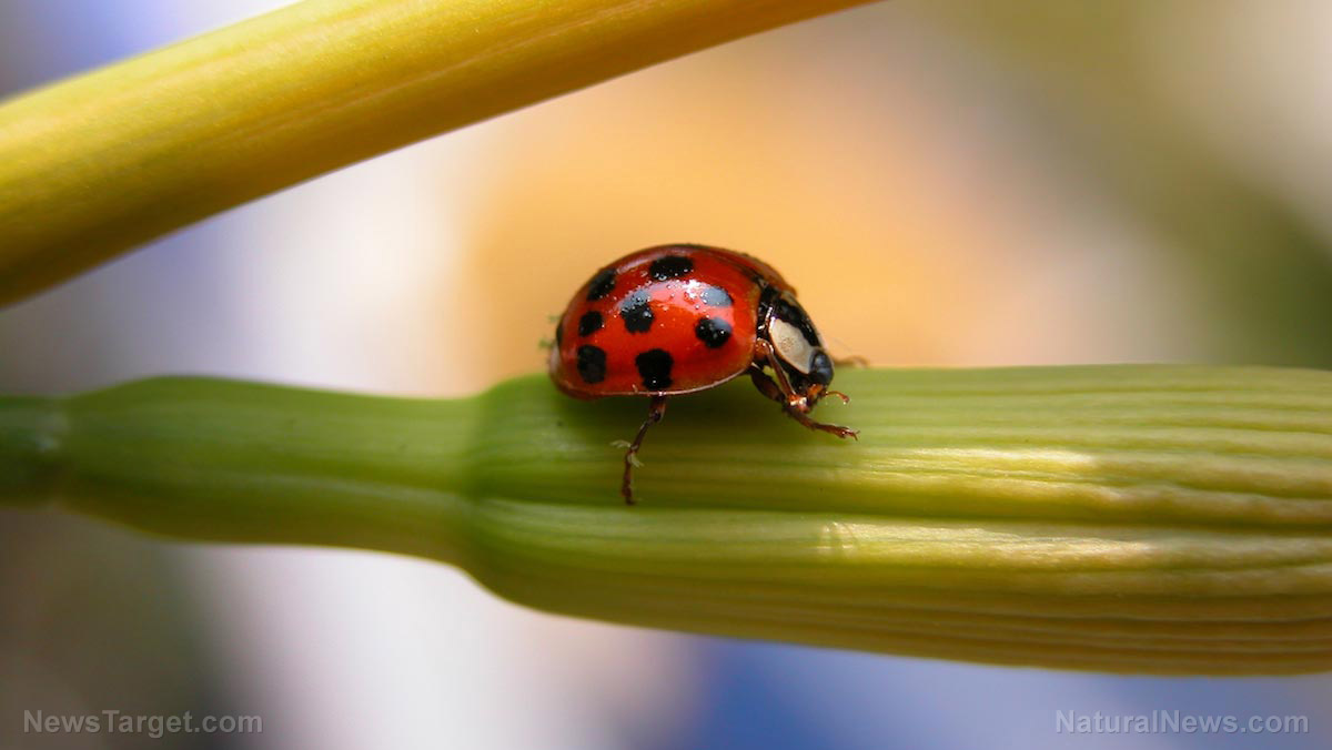"10 beneficial insects to help keep ""bad bugs"" away from your garden"