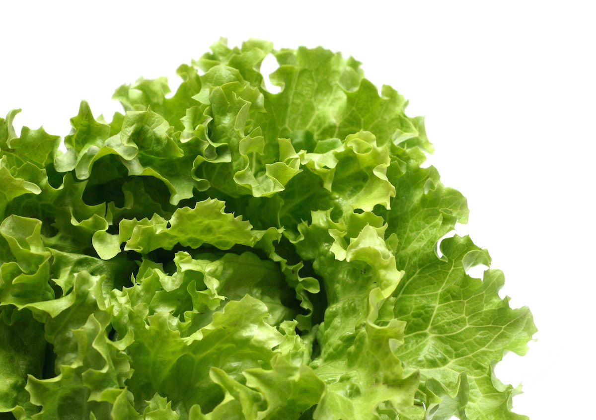 Here's what you need to know about growing your own lettuce