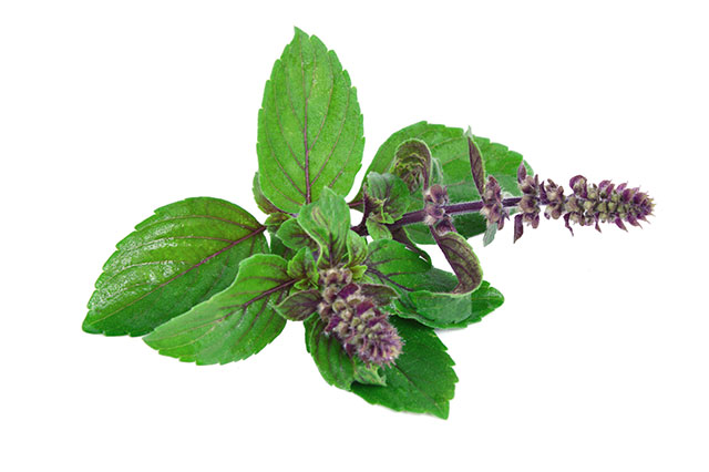 "5 Reasons you should add tulsi – the ""Queen of the Herbs"" – to your diet"
