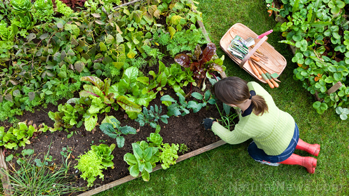 Follow these 4 tips to grow the best vegetables this fall