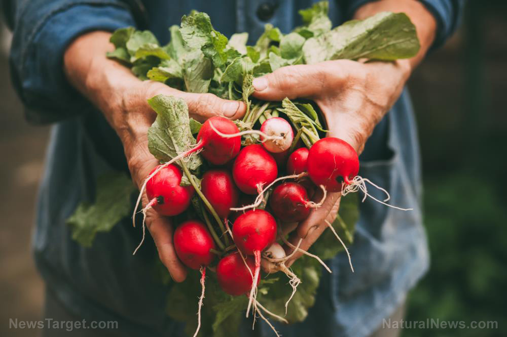 "It's time you put the ""rad"" back in your diet by planting nutritious radishes in your backyard"