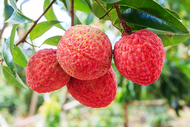 10 Things you have to know about the lychee (recipes included)