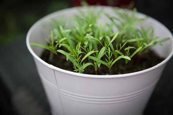13 Herbs and vegetables you can easily regrow from kitchen scraps