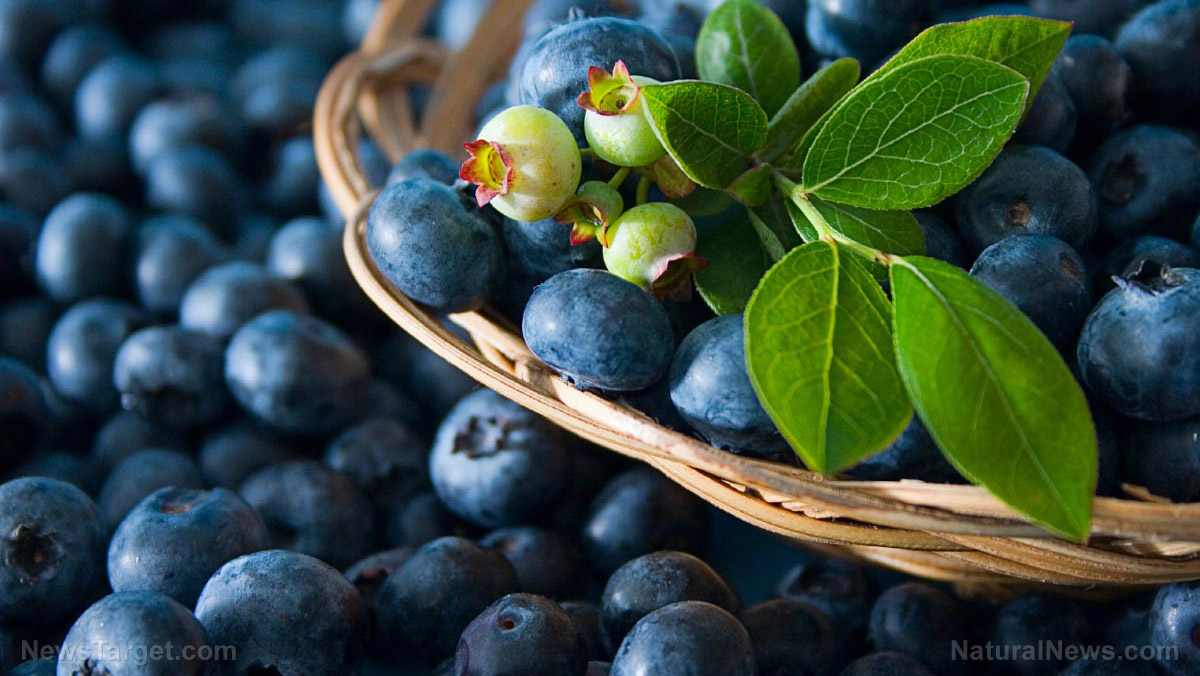 Home gardening 101: How to grow antioxidant-rich blueberries in a container