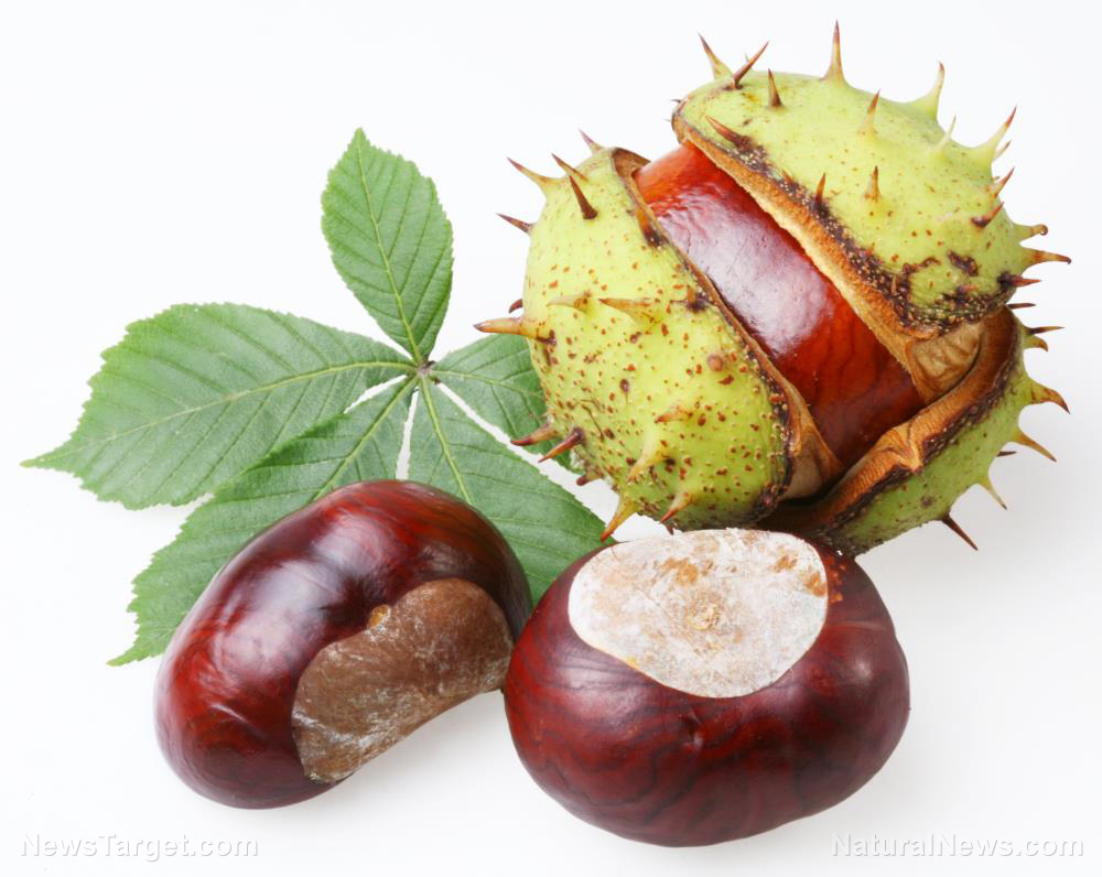 Horse chestnuts are packed with health benefits – here are 3 of them